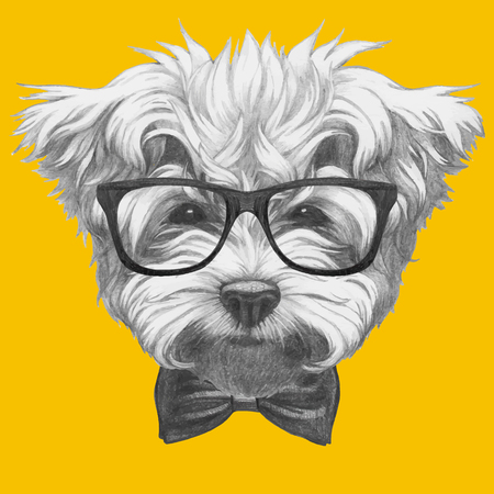 Hand drawn portrait of Maltese Poodle with glasses and bow tie. Vector isolated elements. Illustration