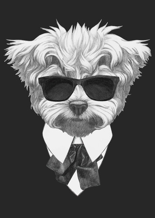 Hand drawn fashion Illustration of Maltese Poodle. Vector isolated elements.