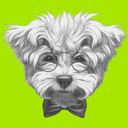 maltese: Hand drawn portrait of Maltese Poodle with glasses and bow tie. Vector isolated elements. Illustration