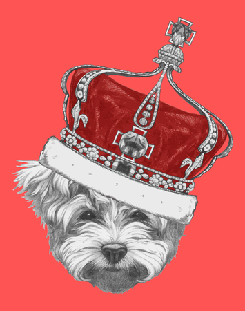 maltese: Hand drawn portrait of Maltese Poodle with crown. Vector isolated elements.