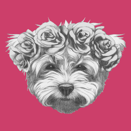 maltese: Hand drawn portrait of Maltese Poodle with floral head wreath. Vector isolated elements. Illustration