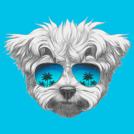 Hand drawn portrait of Maltese Poodle with mirror sunglasses. Vector isolated elements.