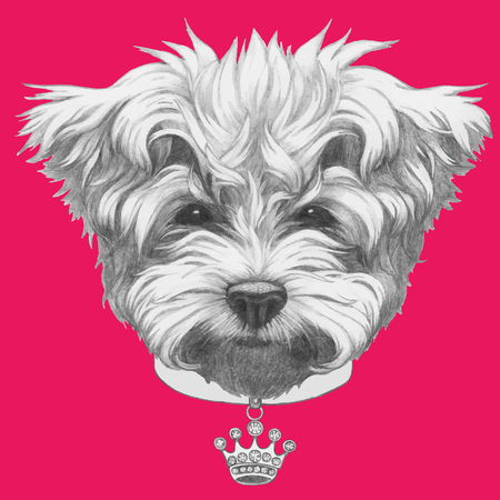 Hand drawn portrait of Maltese Poodle with collar. Vector isolated elements. Illustration