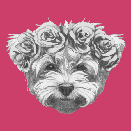 dog rose: Hand drawn portrait of Maltese Poodle with floral head wreath. Vector isolated elements. Illustration