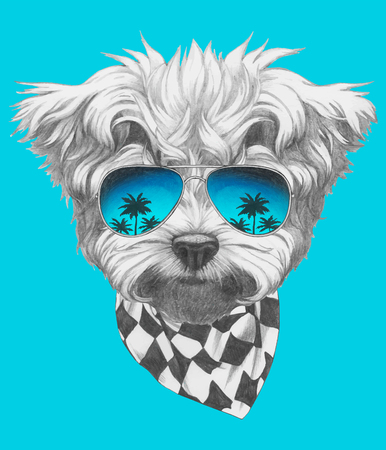 Hand drawn portrait of Maltese Poodle with mirror sunglasses and scarf. Vector isolated elements. Ilustração