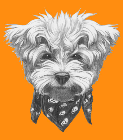 Hand drawn portrait of Maltese Poodle with scarf. Vector isolated elements.
