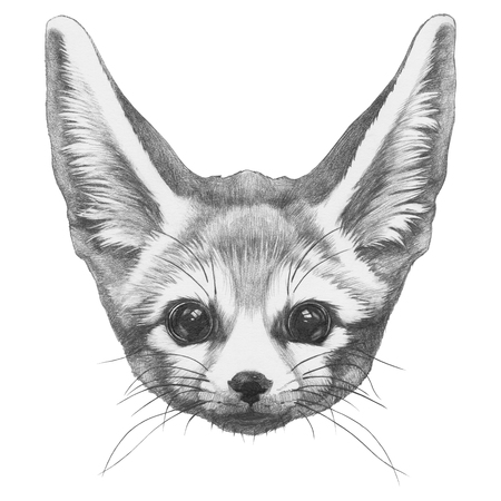 Original drawing of Fennec Fox. Isolated on white background Stock Photo