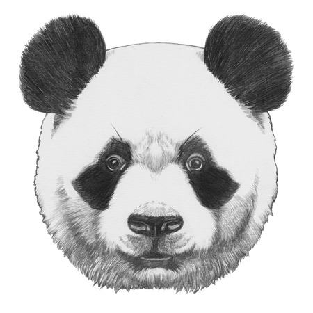 Original drawing of Panda. Isolated on white background Banco de Imagens