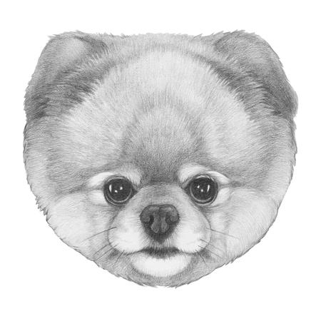 Original drawing of Pomeranian. Isolated on white background. Stock Photo
