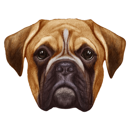 Original drawing of Boxer dog. Isolated on white background. Banco de Imagens