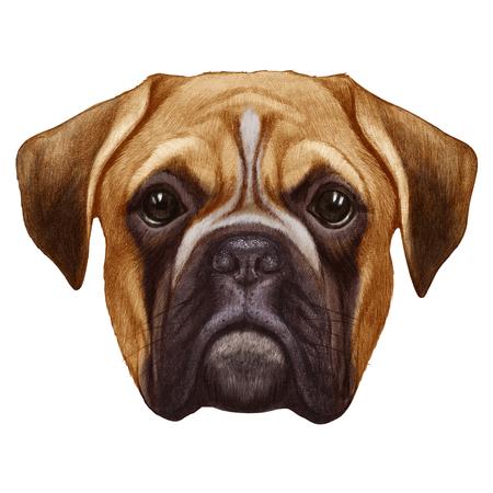boxer dog: Original drawing of Boxer dog. Isolated on white background. Stock Photo