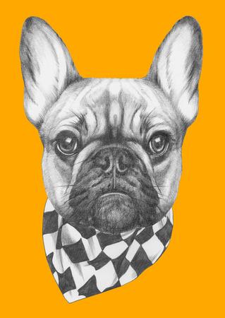 Disegno originale di Bulldog francese con sciarpa. Isolato su sfondo colorato Archivio Fotografico - 70408417