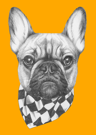 Original drawing of French Bulldog with scarf. Isolated on colored background
