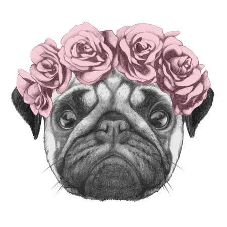 dog rose: Original drawing of Pug Dog with floral head wreath. Isolated on white  background