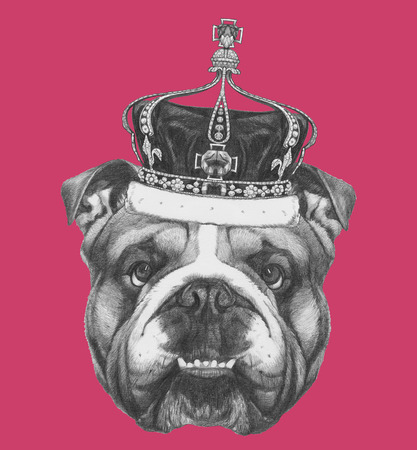 Original drawing of English Bulldog with crown. Isolated on colored background Stock Photo