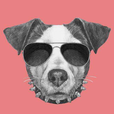 Original drawing of Jack Russell with collar and sunglasses. Isolated on colored background