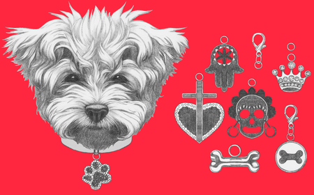 Original drawing of Maltese Poodle with collar. Isolated on white background.