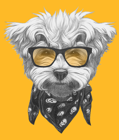 Original drawing of Maltese Poodle with glasses and scarf. Isolated on colored background.
