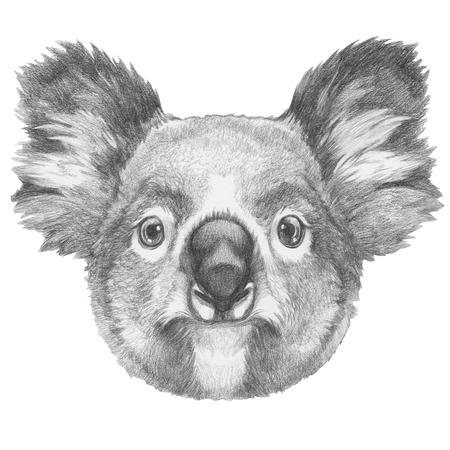 Original drawing of Koala. Isolated on white background. Stock Photo