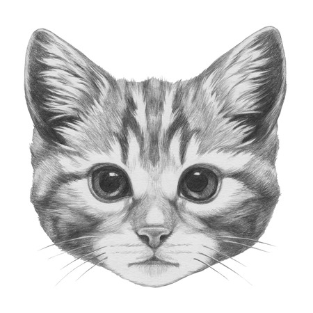 Original drawing of Cat. Isolated on white background