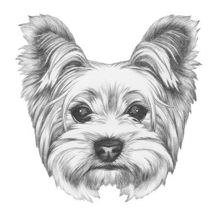 ヨークシャー テリアの犬の肖像画。手描きのイラスト。