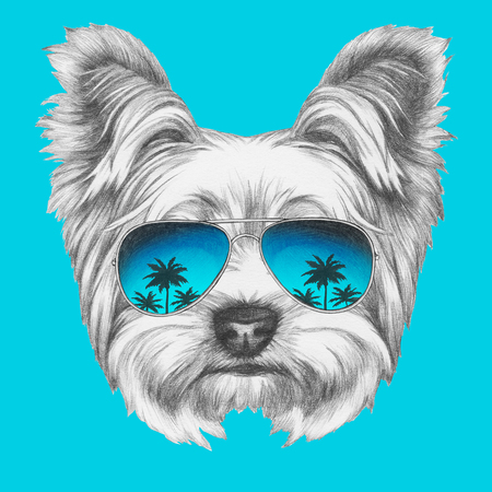 ミラー サングラスとヨークシャー ・ テリア犬の肖像画。手描きのイラスト。 写真素材