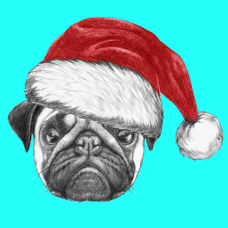pug dog: Portrait of Pug Dog with Santa Hat. Hand drawn illustration.