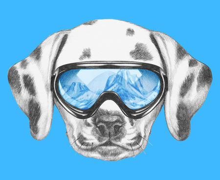dalmatian: Portrait of Dalmatian with ski goggles. Hand drawn illustration. Stock Photo