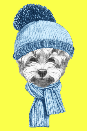 Portrait of Maltese Puddle Dog with hat and scarf. Hand drawn illustration.