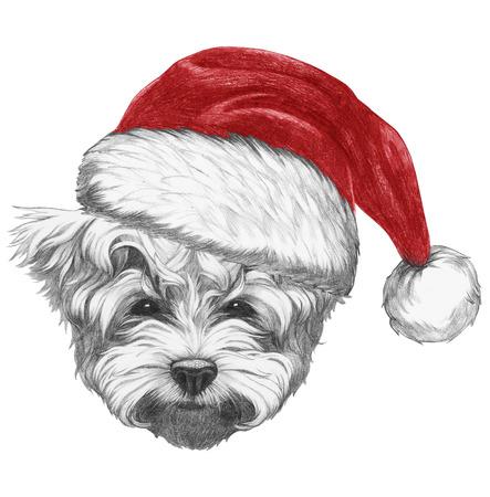 Portrait of Maltese Puddle Dog with Santa Hat . Hand drawn illustration. Stock Photo