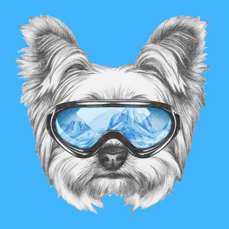 요크 셔 테리어 강아지와 스키 고글 초상화. 손으로 그린 그림입니다.