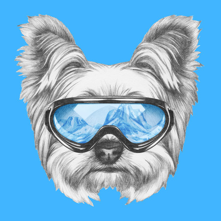 Portrait of Yorkshire Terrier Dog with ski goggles. Hand drawn illustration.