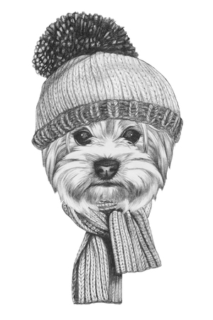 yorkshire terrier: Portrait of Yorkshire Terrier Dog with hat and scarf. Hand drawn illustration.