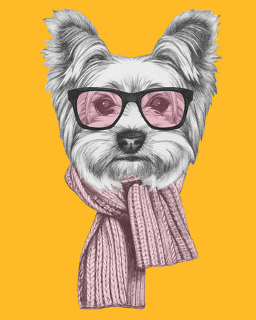 yorkshire terrier: Portrait of Yorkshire Terrier Dog with glasses and scarf. Hand drawn illustration.