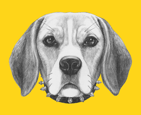 Portrait of Beagle Dog with sunglasses and collar. Hand drawn illustration.