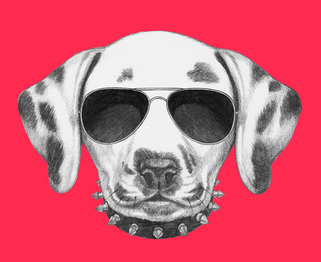 dalmatian: Portrait of Dalmatian Dog with sunglasses and collar. Hand drawn illustration.