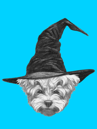 Portrait of Maltese Poodle with witch hat. Halloween illustration