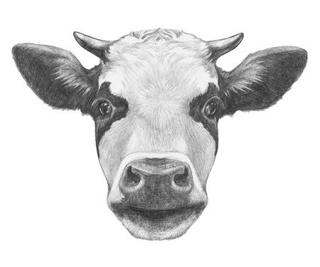 Portrait of Cow. Hand drawn illustration. Stockfoto