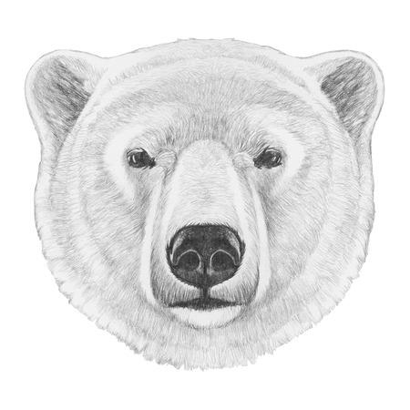 Portrait of Polar Bear. Hand drawn illustration.