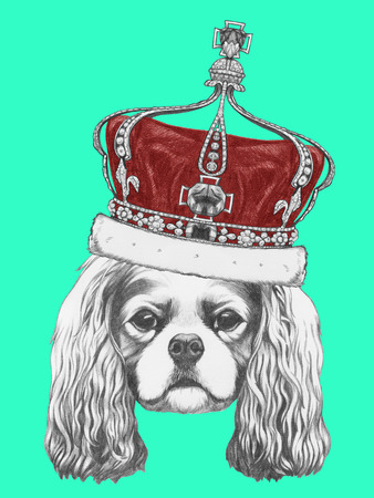 Portrait of Cavalier King Charles Spaniel with crown. Hand drawn illustration. Stock Photo