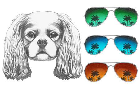 Portrait of Cavalier King Charles Spaniel with mirror sunglasses. Hand drawn illustration.