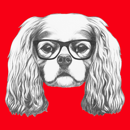 Portrait of Cavalier King Charles Spaniel with glasses. Hand drawn illustration.