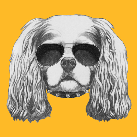 charles: Portrait of Cavalier King Charles Spaniel with sunglasses and collar. Hand drawn illustration.