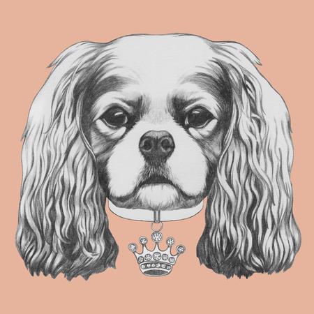 Portrait of Cavalier King Charles Spaniel. Hand drawn illustration.