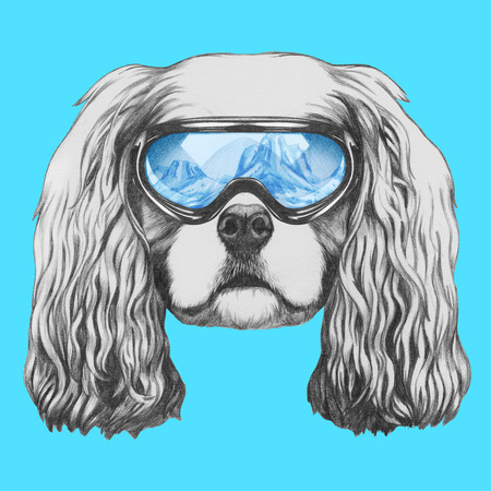 charles: Portrait of Cavalier King Charles Spaniel with ski goggles. Hand drawn illustration.