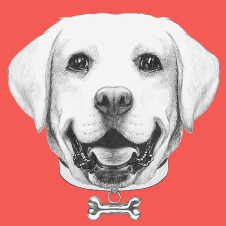 Portrait of Labrador. Hand drawn illustration.