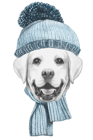 Portrait of Labrador with hat and scarf. Hand drawn illustration.