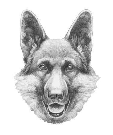 Portrait of German Shepherd. Hand drawn illustration. Banco de Imagens