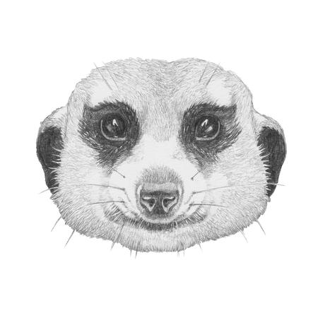Portrait of Meerkat. Hand drawn illustration. Stock Photo