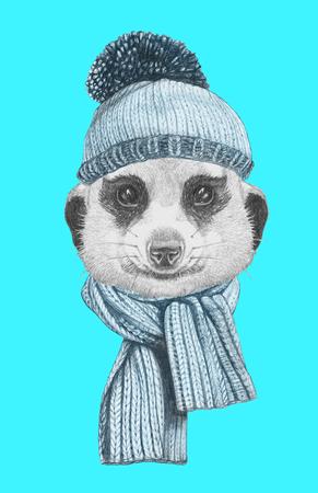 スカーフと帽子とミーアキャットの肖像画。手描きのイラスト。